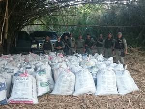Mais de 1600 quilos de maconha prensada foram apreendidos (Foto: Divulgação/Polícia Militar)