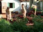 Projeto social transforma crianças em 'mini fazendeiros'