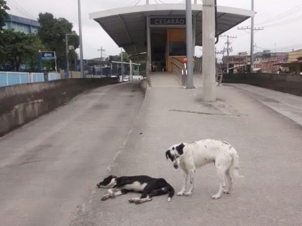 Animais abandonados perto da estação Cesarão do BRT (Foto: Divulgação / BRT)