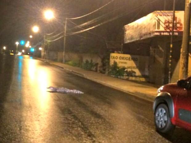 Jacaré foi flagrado ao tentar atravessar Avenida Getúlio Vargas durante chuva em Rio Branco (Foto: Aliedson Ferreira/Arquivo pessoal)