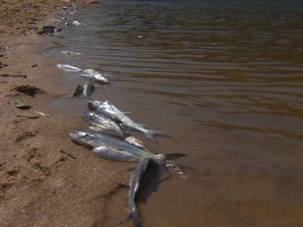Peixes mortos no Rio Jucu, no ES (Foto: Reprodução/ TV Gazeta)