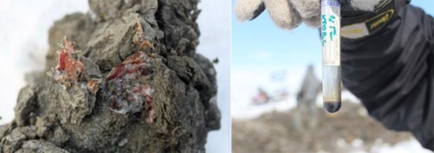À esquerda, músculos bem preservados encontrados na carcaça de um mamute; à direita amostra de sangue coletada por cientistas na região do Ártico (Foto: Semyon Grigoryev/AFP)
