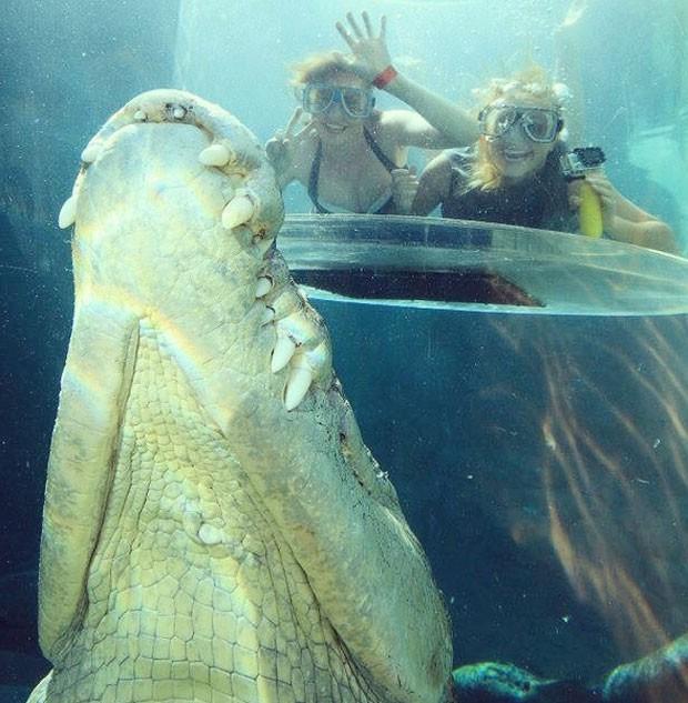 Crocodilo 'intrometido' fez sucesso ao aparecer na foto que duas jovens (Foto: Reprodução/ Instagram/Crocosauruscove)