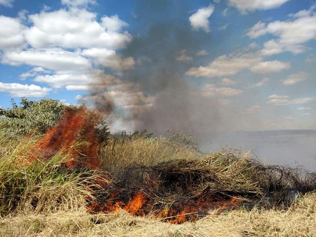 Fogo atinge matagal em rodovia de Analândia (Foto: Fabio Rodrigues/ G1)
