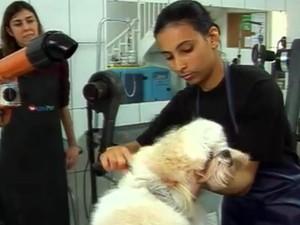 Tosador de Petshop encontra vagas no PAT de Valinhos  (Foto: Reprodução TV Globo)