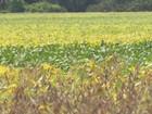 Plantio da soja aumentou mais de 70% no Vale do Jamari, em RO
