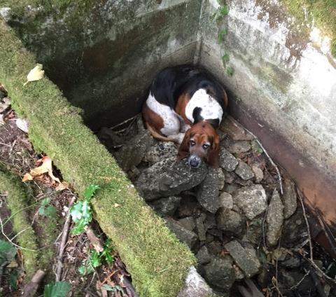 Uma cachorrinha passou dias de guarda para garantir a segurança da amiga