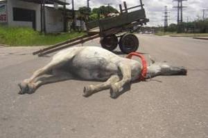 Animais são forçados a carregar sobrecarga de peso (Foto: Divulgação/ Projeto Carroceiro )