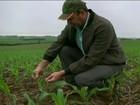 Chuva volta ao Sul do país e garante a umidade do solo