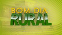 Conheça as produções rurais de Santarém e região (Tato Gomes)