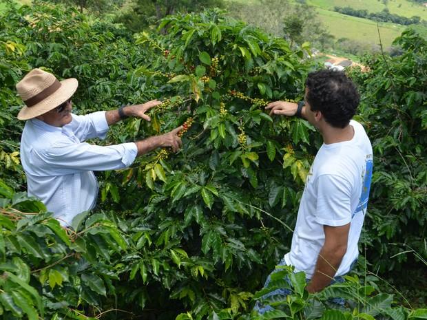 Fabrício e o pai na lavoura de café: produto campeão também entra na receita da cerveja artesanal (Foto: Lucas Soares/G1)