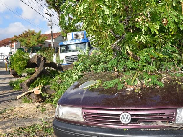 """Segundo Edvaldo Freire de Araújo, motorista do veículo Wolksvagem Santana atingido pela árvore, a queda da árvore aconteceu muito rápido no momento em que ele havia ultrapassado o caminhão. """"Ele deu sinal de que iria parar, eu então puxei pra esquerda e parei no semáforo. Quando estava parado só notei o pau caindo em cima do carro e pedi ajuda as pessoas"""", explicou. Edvaldo Freire vinha sozinho no carro e não ficou ferido (Foto: Walter Paparazzo/G1)"""