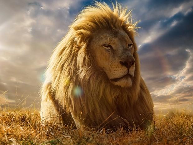 Fotos de leão em pôr do sol renderam medalha de ouro a Jackson Carvalho (Foto: Jackson Carvalho/Divulgação)
