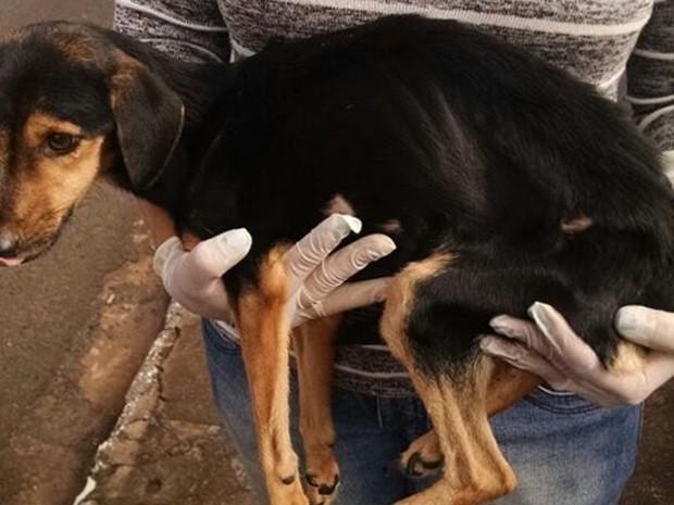 Cachorro muito magro foi retirado por voluntário (Foto: Célia Barros)
