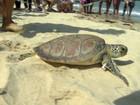 Tartaruga encontrada em rede de pesca é solta em Vitória