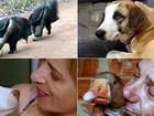 Retrospectiva 2016: Reveja casos de animais que foram notícias no ano