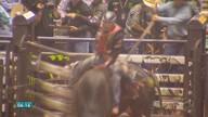 Cuiabá sedia uma das maiores competições de montaria de touros do mundo