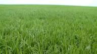Produtores do cerrado piauiense esperam produção recorde na próxima safra de grãos