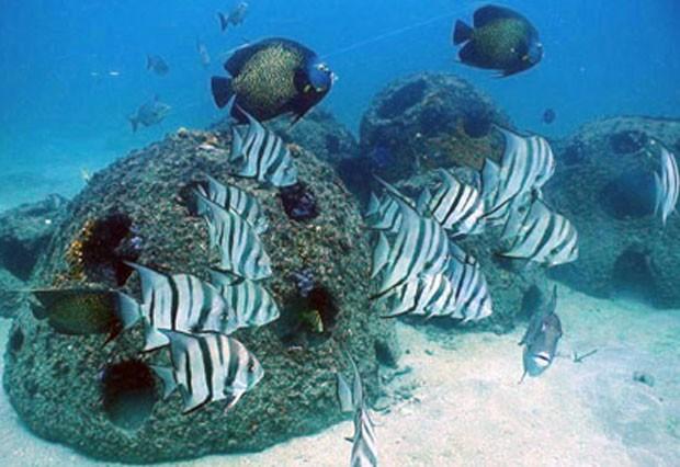 Uma urna biodegradável pode custar 30 mil pesos (R$ 5.200) e entre 50 mil e 70 mil (R$ 8.670 e R$ 12,1 mil) repousar em um recife marinho (Foto: Reprodução/Inmemoriam)