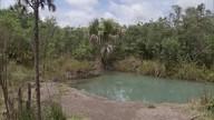 Projeto Verdejando acontece neste domingo (21) na Floresta Nacional de Brasília