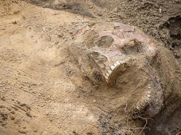 Restos mortais são vistos durante a exumação em uma cova coletiva da era stalinista no cemitério militar localizado no centro de Varsóvia, na Polônia. Acredita-se que o local contenha cerca de 200 vítimas de uma campanha pós-guerra contra o 'terror comuni (Foto: Wojtek Radwanski/AFP)