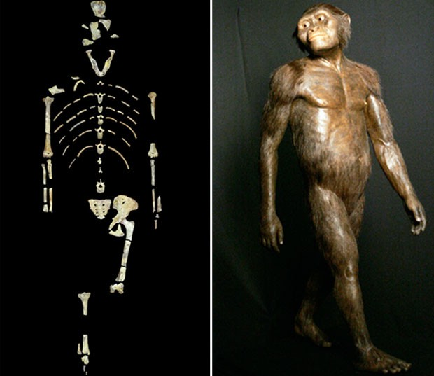 Montagem de fotos mostra o esqueleto de Lucy e um modelo tridimensional do Australopithecus afarensis (Foto: University of Texas at Austin via AP/AP Photo/Pat Sullivan)
