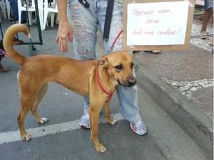 Participante de evento em Santos procura  dono de cão perdido (Foto: Mariane Rossi/G1)