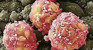 Células-tronco (Foto: BBC)