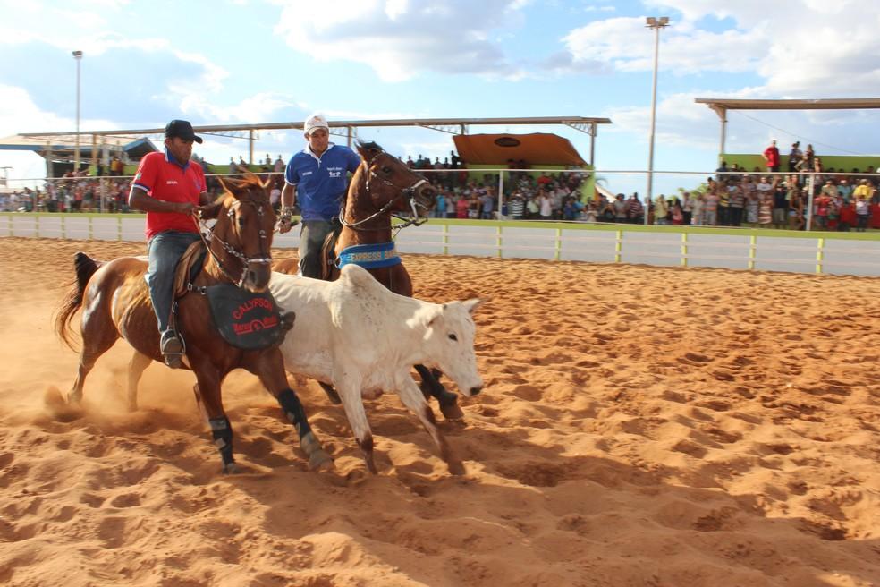 Na vaquejada, boi é solto em uma pista e dois vaqueiros, montados em cavalos, tentam derrubar o animal pelo rabo (Foto: Valdivan Veloso/G1)