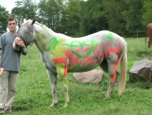 Égua 'Lily' foi pichada com tinta fluorescente amarela, laranja e verde.  (Foto: Reprodução)
