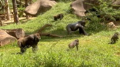 Zoológico de BH abriga muitas espécies raras de animais