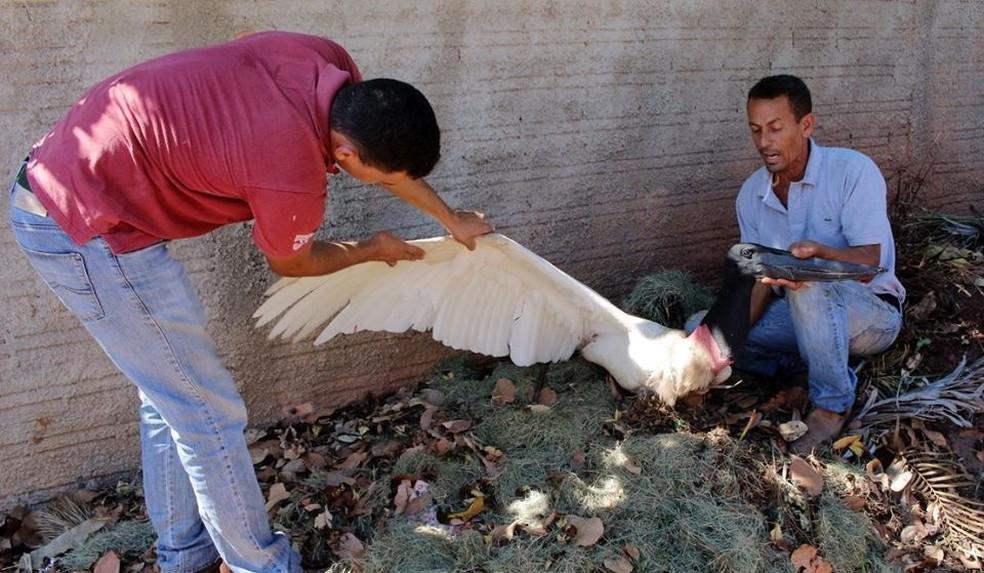 Moradores disseram que ave foi morta depois de se alimentar de peixes em propriedade particular (Foto: Edevilson Arneiro)