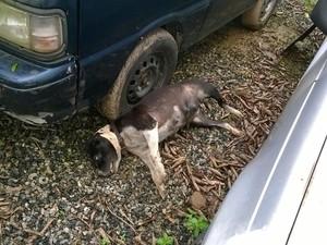 Polícia suspeita que cachorros tenham sido envenenados (Foto: Divulgação / Polícia Militaa)
