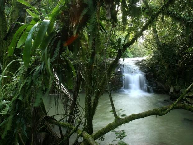 No local há trilhas e cachoeiras (Foto: Arquivo Ecopef/Divulgação)
