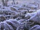 RS tem primeiro registro de 0ºC no ano e formação de geada, diz Inmet