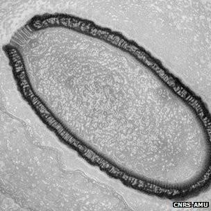 Os cientistas afirmam que não há risco de o contágio representar qualquer perigo para humanos ou animais (Foto: BBC)