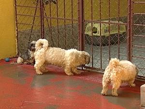 30 dos 36 cães já foram encaminhados para outras casas (Foto: Reprodução/TV Integração)