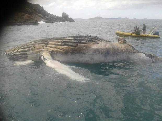 Ainda não se sabe para onde o animal será levado.  (Foto: Raimundo Rocha/Guarda marítima)