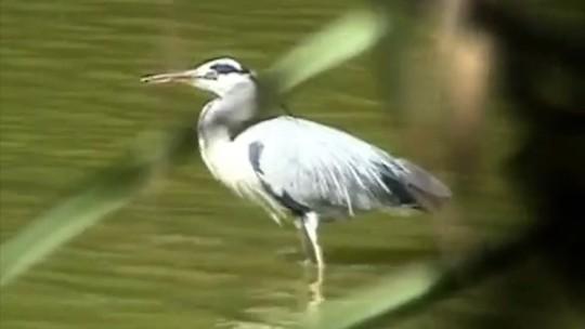 Área de preservação ambiental será revitalizada no Maranhão
