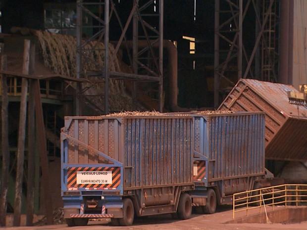 Cerca de 544,53 milhões de toneladas de cana foram processadas até novembro na região Centro-Sul do país (Foto: Reprodução/EPTV)