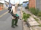 Zoonoses recolhe toneladas de criadouros do Aedes aegypti
