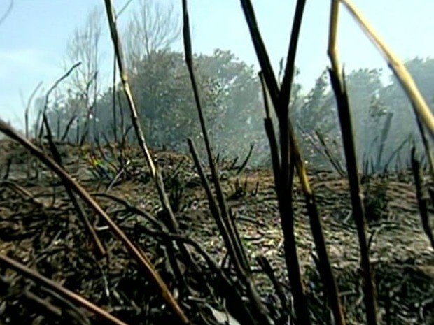 Chamas se espalham por Parque Estadual de Itaúnas (Foto: Reprodução/ TV Gazeta)
