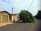 Temporal derruba 17 árvores em Araraquara, diz Corpo de Bombeiros
