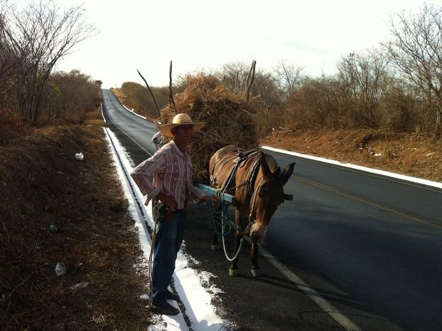 José Maria Neto tem que procurar capim todos os dias para alimentar seus cavalos (Foto: Adriana Lisboa / G1)