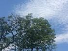 Semana em MS começa com altas temperaturas e chuva, prevê Inmet