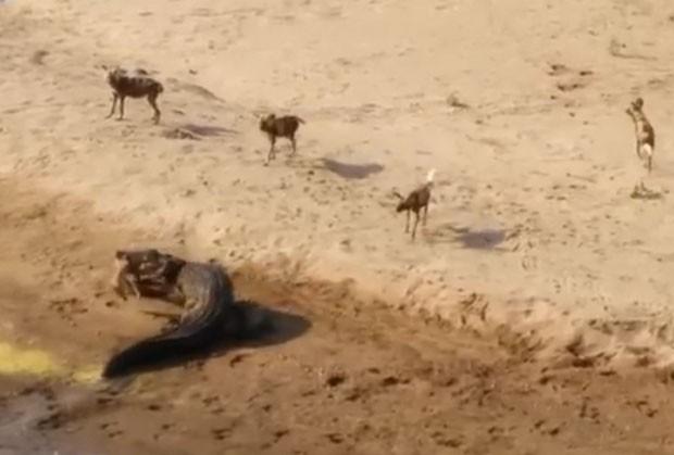 Cena foi filmada em agosto no rio Olifants (Foto: Reprodução/YouTube/Fionntan Roukema)