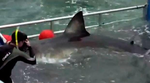 Equipe estuda, captura, cataloga e solta os tubarões (Foto: ONG Ocearch)