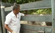 Série Profissões: Conheça o zootecnista