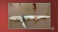 Tubarão é encontrado morto em praia de São Miguel em Ilhéus, no sul do estado