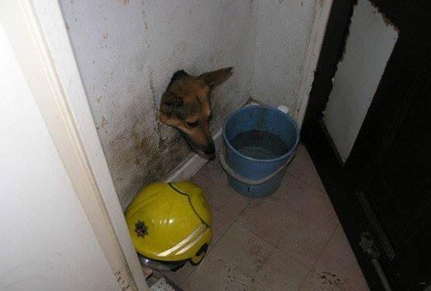 Cão é resgatado após ficar com a cabeça entalada em buraco na parede